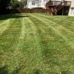 Lawn and Grass Mowing