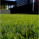 Landscaping and lawn cleaning